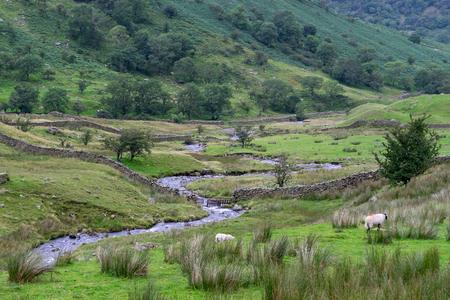 cumbria: Sheep near a stream north of Windermere