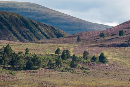 range: Heather on the Cairngorm Mountain Range