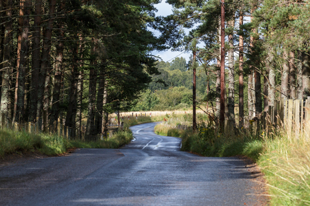 garten: Scottish road near Boat of Garten