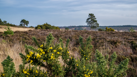 russet: View of the Ashdown Forest in Winter