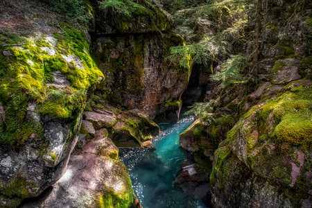 avalanche: Looking into Avalanche Creek