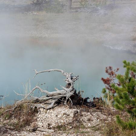 prismatic: Dead Tree Stump at the Grand Prismatic Spring Stock Photo