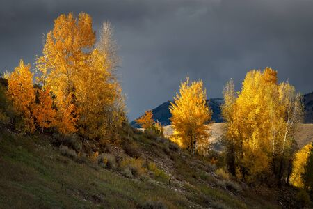 colours tints: Autumn Colours in Wyoming Stock Photo