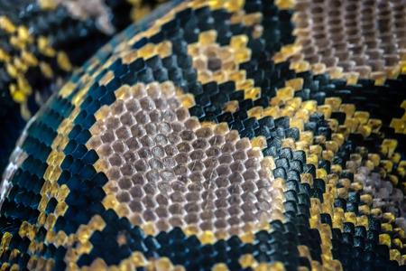 reticulatus: Reticulated Python (Python reticulatus) skin close up in the Bioparc Fuengirola Stock Photo
