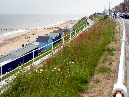 southwold: British Wildflowers near the Beach at Southwold Stock Photo