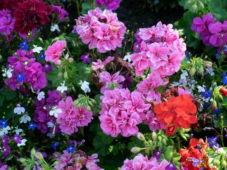 grinstead: Colourful Flower Display in East Grinstead