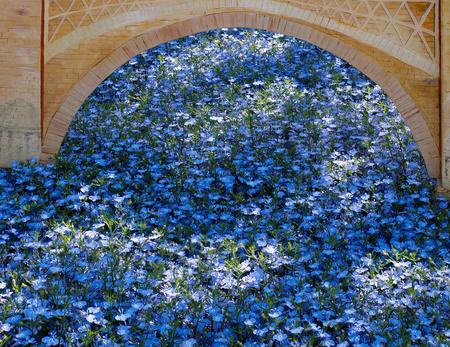 grinstead: Display of Blue Flowers in East Grinstead