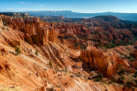 hoodoos: Sun Kissed Hoodoos and Pine Trees in Bryce Canyon