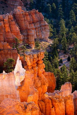hoodoos: Glowing Hoodoos in Bryce Canyon