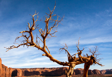 Tree with Legs in Monument Valley