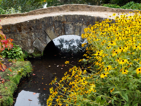 susan: Black-eyed Susan Flowers by a Small Bridgeat Wakehurst Place in Sussex