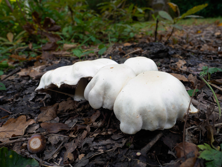 sussex: Mushrooms Growing in Sussex Stock Photo