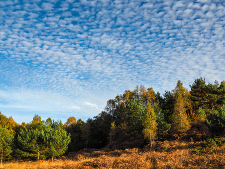 weald: Scenic View of the Ashdown Forest in Sussex