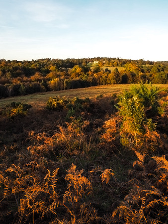 sussex: Scenic View of the Ashdown Forest in Sussex
