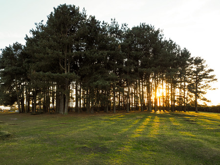 clump: Scenic View of Friends Clump in the Ashdown Forest