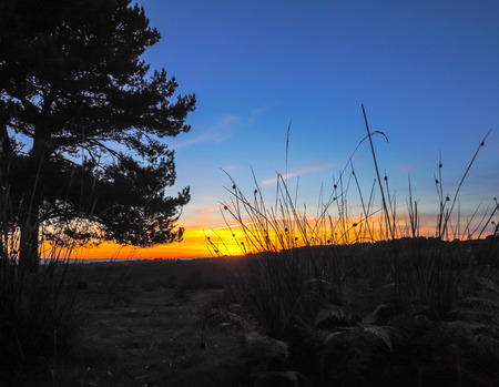 Sunset over the Ashdown Forest in Sussex