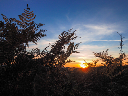 sussex: Sunset over the Ashdown Forest in Sussex