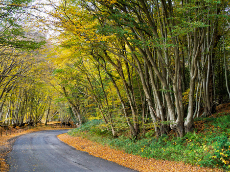Autumnal Scene in the Sussex Countryside Stock Photo