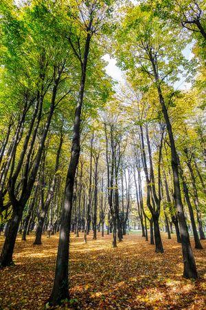 monza: Autumn colours in Parco di Monza Italy