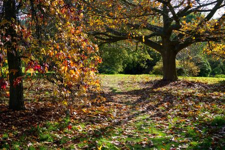 sussex: Autumnal Colours in a Sussex Garden Stock Photo