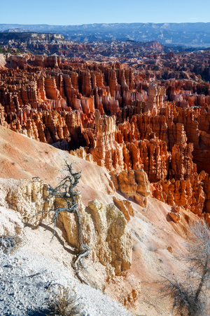 bathed: Early Morning in Bryce Canyon