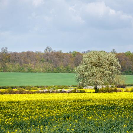 cambridgeshire: Arable Farmland in Cambridgeshire on a Sunny Spring Day