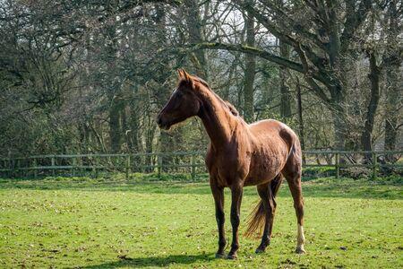 Thoroughbred Horse Enjoying the Spring Sunshine