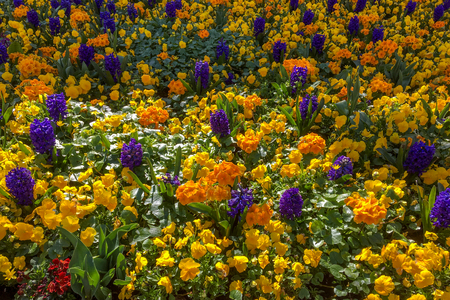 grinstead: Colourful Bed of Flowers in East Grinstead Stock Photo