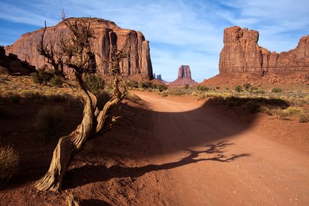 Dead Tree in Monument Valley Utah USA