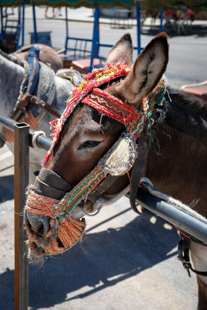 pueblo: MIJAS, ANDALUCIASPAIN - JULY 3 : Donkey Taxi in Mijas Andalucía Spain on July 3, 2017