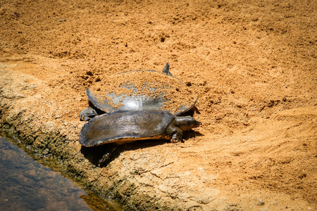 FUENGIROLA, ANDALUCIASPAIN - JULY 4 : Turtles in the Bioparc Fuengirola Costa del Sol Spain on July 4, 2017