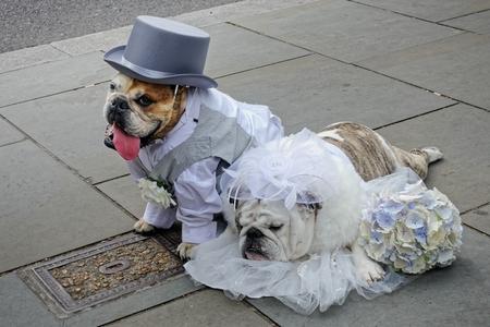 Bride asleep at her own wedding in London