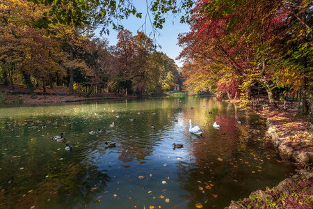 Autumn Scene at the Lake in Parco di Monza Stock fotó