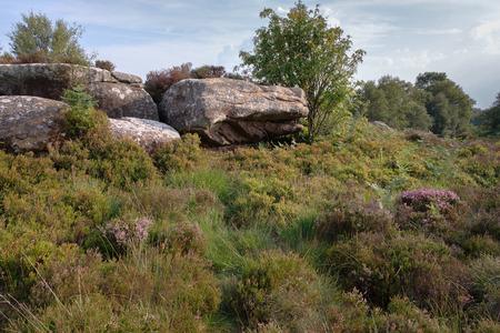 Scenic view of Brimham Rocks in Yorkshire Dales National Park Archivio Fotografico