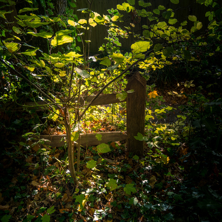 Dark but sunlit glade in Lindfield West Sussex Stock Photo