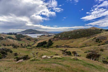 The Otago Peninsula New Zealand