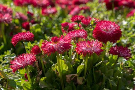 Spring flowers blooming in a flowerbed in East Grinstead