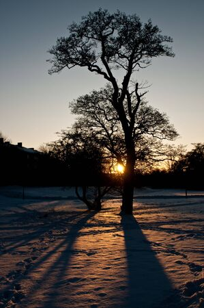 A tree in the winter snow Stock Photo - 9012550
