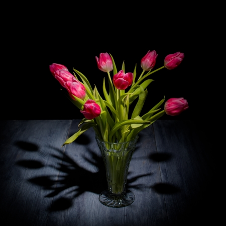 Tulips on a blue gray wood table with black background photo