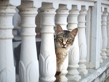 curious cat peeks out from behind the balustrade.