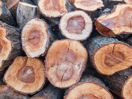 Piled pine tree logs. Stacks of cut wood. Stock Photo