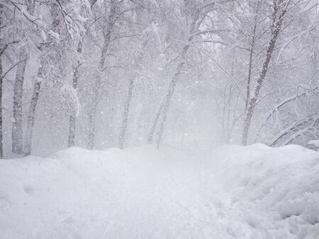 Heavy snowing, snow-covered path and stuck snow on the branches of trees. Park in the snowy wintertime. Selective focus.