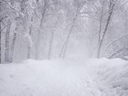 Starker Schneefall, schneebedeckter Weg und festsitzender Schnee auf den Ästen der Bäume. Parken Sie in der verschneiten Winterzeit. Selektiver Fokus.