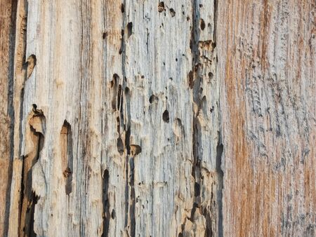 Old cracked wood with wormholes. Wood texture background. Stock Photo