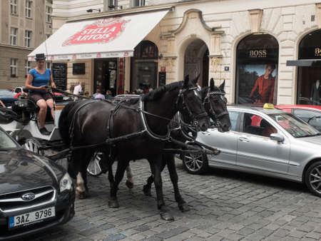 Young adult woman drives a horse-drawn carriage