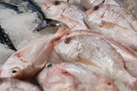 Chilled fish on ice. Red dorado sea fish on fishmonger stall