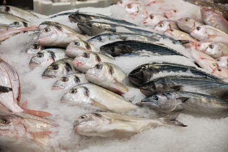 Chilled fish on ice. Bonito tuna, dorado and other sea fish on fishmonger stall Stock Photo