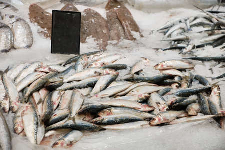 Twait shad and other kinds of chilled sea fish on ice at market