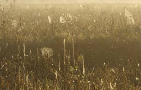 Field of webs. Stock Photo