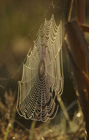 Spiders web.